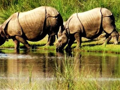 Bardia National Park Tours