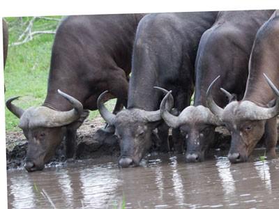 Koshi Tampu Wildlife Reserve