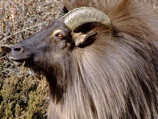 Langtang National Park( Rasuwa Nepal)